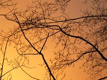Takken die tegen de hemel worden gesilhouetteerd Royalty-vrije Stock Fotografie