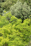 Takken en bladeren van verschillend soort bomen Stock Afbeelding