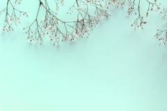 Takken met achtergrond van de bloemen de uitstekende lente stock foto's