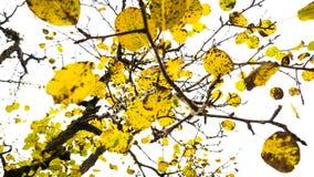 Takken met bladeren Royalty-vrije Stock Fotografie