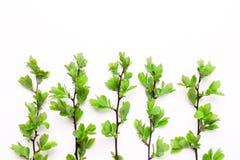 Takken met bladeren van een boom, een struik, installaties op een rij Stock Afbeelding