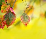Takken met de herfstbladeren stock foto