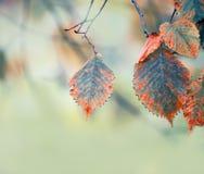 Takken met de herfstbladeren stock foto's