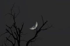 Takken met Maan bij Nacht Royalty-vrije Stock Afbeeldingen