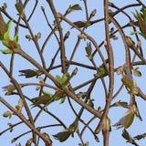 Takken met nieuwe groene spruiten of spruit en bladeren Stock Foto's