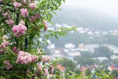 Takken met roze rozen op een achtergrond van stad stock foto's