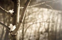 Takken met sneeuw Stock Fotografie