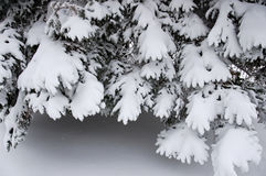 Takken met Sneeuw stock foto's