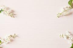 Takken met uiterst kleine witte bloemen Stock Afbeelding