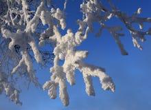 Takken met witte rijp op zonnige dag Royalty-vrije Stock Foto's
