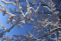 Takken met witte rijp op zonnige dag Stock Foto's