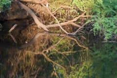 Takken in moerassig water worden weerspiegeld dat Stock Foto