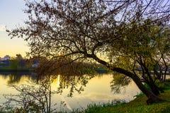 Takken van Autumn Tree Hanging over Meer stock afbeeldingen