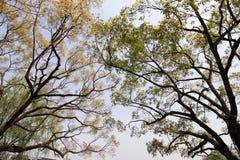 Takken van Bomen stock fotografie