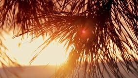 Takken van bomen bij zonsondergang stock videobeelden