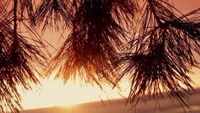 Takken van bomen bij zonsondergang stock footage