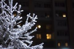 Takken van bomen in de rijp tegen de achtergrond van nachtlichten met een bokeheffect royalty-vrije stock foto