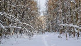 Takken van bomen door het gewicht van sneeuw neer worden gebogen die Stock Fotografie