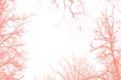 Takken van bomen in koraalkleur tegen de lichte hemel worden gekleurd die royalty-vrije stock foto