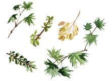 Takken van bomen met bladeren Geïsoleerde watercolor Stock Foto's