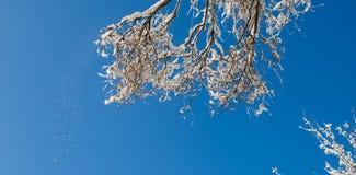 Takken van bomen met sneeuw tegen de blauwe hemel die in worden behandeld stock foto's