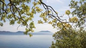 Takken van bomen, neiging over het overzees en bergen op de horizon Stock Afbeelding