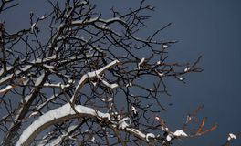 Takken van bomen onder de sneeuw bij nacht tegen de zwarte hemel royalty-vrije stock afbeelding