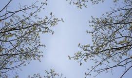 Takken van bomen tegen de blauwe hemel Silhouetteer een boom tegen een achtergrond van hemel Stock Fotografie