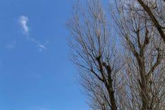 Takken van bomen tegen een blauwe hemel stock fotografie