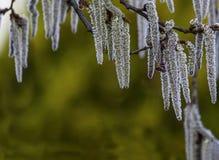 Takken van bomenesp in lentetijd op een groene achtergrond Royalty-vrije Stock Foto