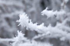 Takken van de close-up de sneeuw behandelde boom vorst, sneeuwstorm, blizzard royalty-vrije stock fotografie