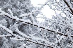 Takken van de close-up de sneeuw behandelde boom vorst, sneeuwstorm, blizzard stock foto's