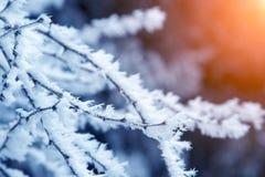 Takken van de close-up de sneeuw behandelde boom vorst, sneeuwstorm, blizzard Zonlicht bij zonsondergang stock fotografie