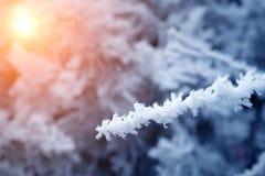 Takken van de close-up de sneeuw behandelde boom vorst, sneeuwstorm, blizzard Zonlicht bij zonsondergang royalty-vrije stock foto's