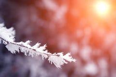 Takken van de close-up de sneeuw behandelde boom vorst, sneeuwstorm, blizzard Zonlicht bij zonsondergang royalty-vrije stock foto