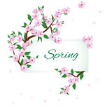 Takken van de lente bloeiende bomen stock illustratie
