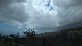 Takken van de struikbeweging in de wind in de bergen stock videobeelden