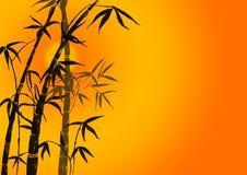 Takken van een bamboe Stock Foto's