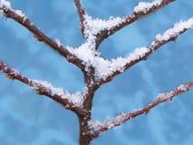 Takken van een boom die met een sneeuw wordt behandeld royalty-vrije stock fotografie