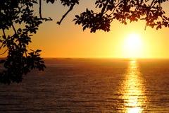 Takken van een boom en een zonsondergang Stock Afbeeldingen