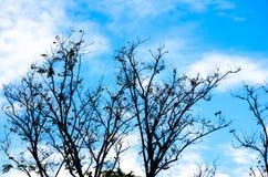 Takken van een boom met een blauwe hemelachtergrond Stock Foto's