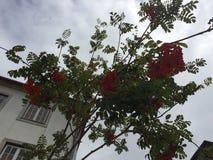 takken van een boom met een gebouw en de hemel op de achtergrond stock afbeeldingen