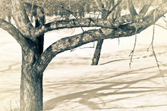 Takken van een boom tegen een achtergrond van sneeuw Stock Afbeeldingen