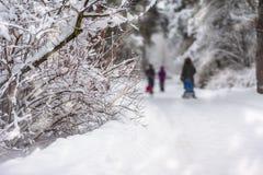 Takken van een bosdieboom met sneeuw, onherkenbare families met wordt behandeld kinderen met sleeën in sneeuwpark, de winter royalty-vrije stock afbeeldingen