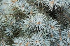 Takken van een de Winterboom Stock Afbeeldingen