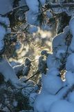 Takken van een Kerstboom met sneeuw wordt behandeld die stock afbeelding