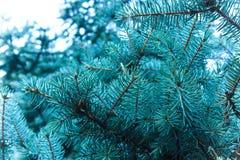 Takken van een naaldboom de geur van Kerstmis stock afbeelding