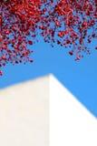 Takken van een rode boom met diep blauwe zonnige hemel Stock Foto's