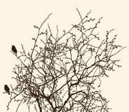 Takken van een vergankelijke boom in de lente vector illustratie