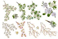 Takken van fruitbomen Royalty-vrije Stock Afbeeldingen